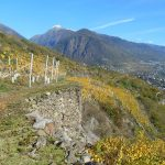 Ar.Pe.Pe: The New Dawn of Nebbiolo from Valtellina 14