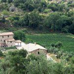 Uccelliera: Andrea Cortonesi's Deep Roots in Montalcino 11