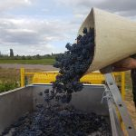 2020 Harvest Notes from France 11