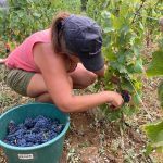 2020 Harvest Notes from France 14