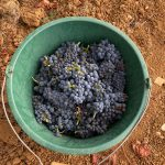 2020 Harvest Notes from France 15