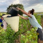 2020 Harvest Notes from France 16