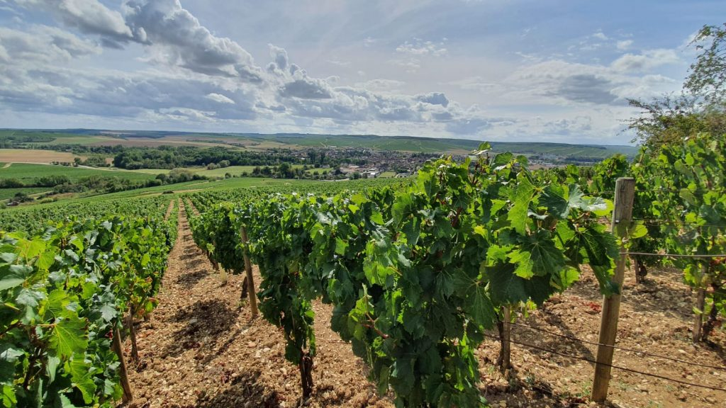 2020 Harvest Notes from France 18