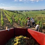 2020 Harvest Notes from France 1