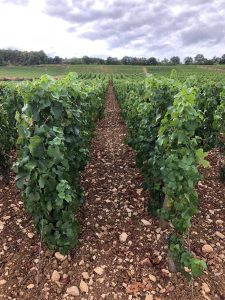 2020 Harvest Notes from France 22