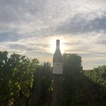 2020 Harvest Notes from France 23