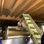 2020 Harvest Notes from France 2