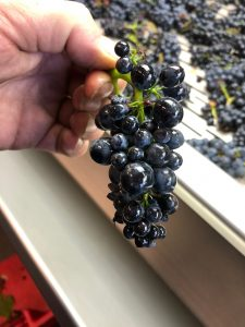 2020 Harvest Notes from France 30