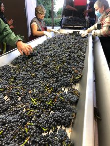 2020 Harvest Notes from France 31