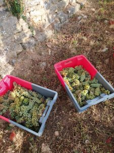 2020 Harvest Notes from France 33
