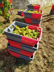 2020 Harvest Notes from France 34