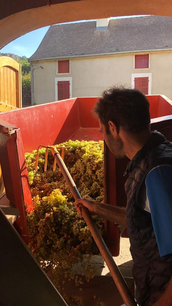 2020 Harvest Notes from France 5