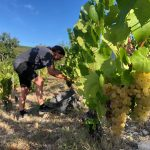 2020 Harvest Notes from France 6
