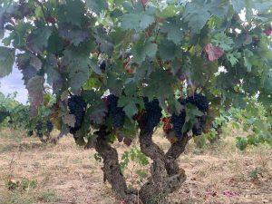 Anza: the Fresh Face of Rioja from Diego Magaña 1