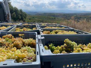Anza: the Fresh Face of Rioja from Diego Magaña 2
