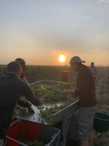 2021 Harvest Notes from France 2