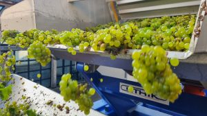 2021 Harvest Notes from France