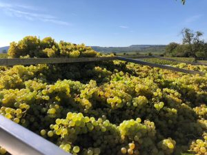 2021 Harvest Notes from France 4