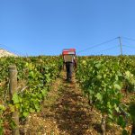 2021 Harvest Notes from France 6