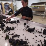 2021 Harvest Notes from France 8